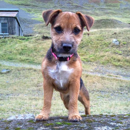 puppy-classes-cumbria