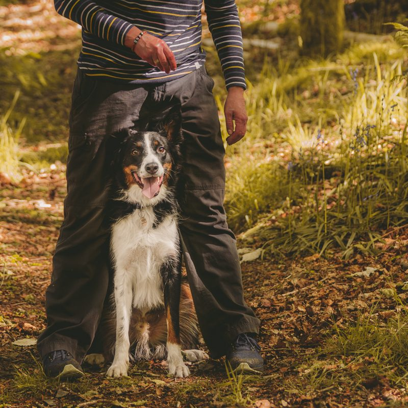 cumbria-canine-services-for-web-4